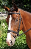 Bridle Gifted pic